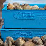 Cajas de plástico azul personalizadas con relieve y con almejas