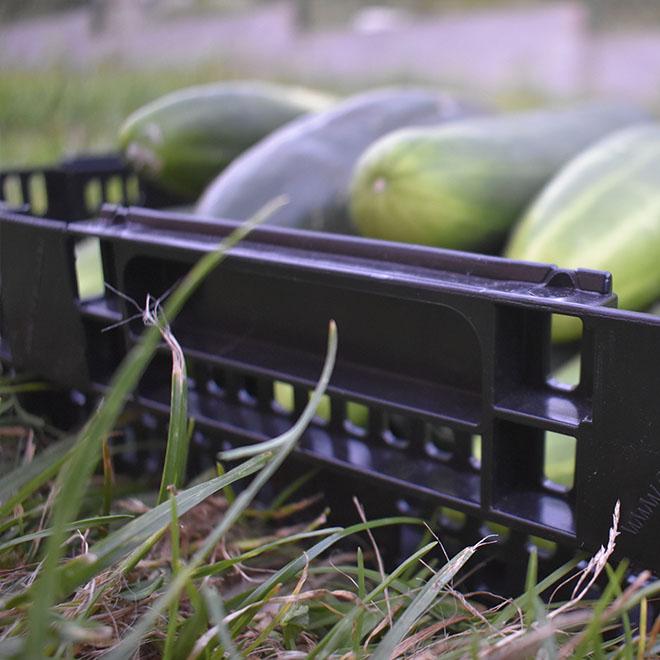 Cajas para fruta y verdura