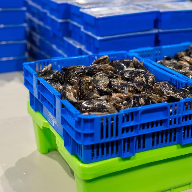 Cajas de plástico para picking