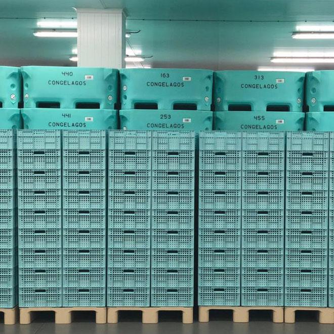 Cajas para congelación